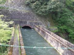20100501torisawasaruhashi-05.jpg