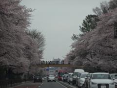 20160402kunitachi-01
