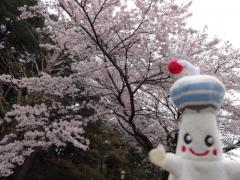 20160402kunitachi-04