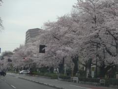 20160402kunitachi-07
